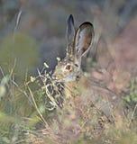 Un coniglietto a pranzo immagine stock
