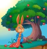 Un coniglio Fotografie Stock Libere da Diritti