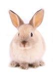 Un coniglio Immagini Stock