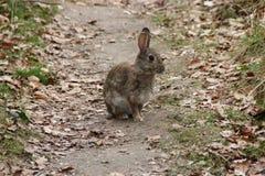 Un coniglio Fotografie Stock