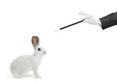 Un coniglio bianco e una mano che tengono una bacchetta magica Immagini Stock