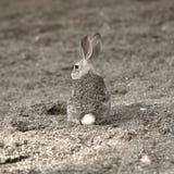 Un coniglio cammuffato. Fotografia Stock Libera da Diritti