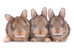 Un coniglio dei tre bambini su bianco fotografia stock