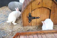 Un coniglio di due bianchi in una gabbia immagini stock libere da diritti