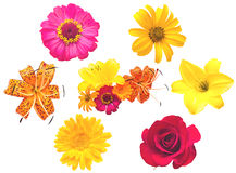 Un conjunto de flores. Foto de archivo