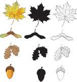 Un conjunto de hojas del arce y del roble Imagen de archivo libre de regalías