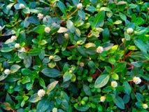 Un conjunto de plantas Fotos de archivo