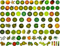 Un conjunto de símbolos de la copa de árbol ilustración del vector