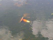 Un cono arancio caduto della via nell'acqua fotografia stock libera da diritti