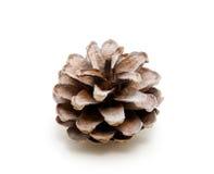 Un cono del pino Imagen de archivo