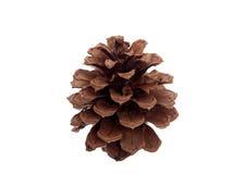 Un cono del pino aislado Foto de archivo