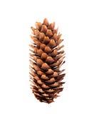 Un cono del pino su priorità bassa bianca Immagine Stock Libera da Diritti
