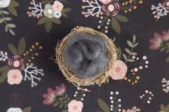 Un contexte nouveau-né de Digital sur une surface florale photos stock