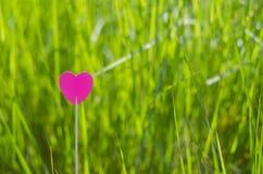 Un corazón rosado en la hierba Imagen de archivo