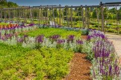 Un corridoio dei fiori della salvia porpora e del lanata dello stachys soleggiati Fotografie Stock Libere da Diritti