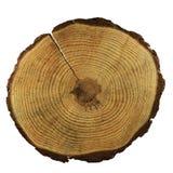 Un corte de un árbol con los anillos anuales en blanco imagen de archivo