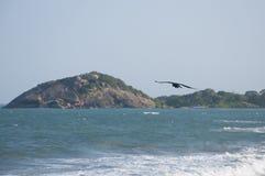 Un corvo alla costa Fotografie Stock Libere da Diritti