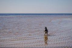 Un corvo sta camminando nel mare fotografia stock libera da diritti