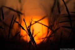 Un coucher de soleil images stock