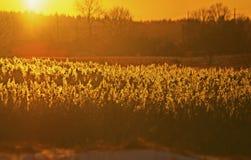 Un coucher du soleil au-dessus des précipitations image libre de droits