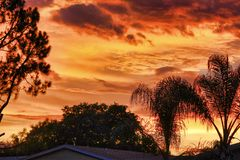 Un coucher du soleil orange rougeâtre au-dessus des arbres ombragés photos libres de droits
