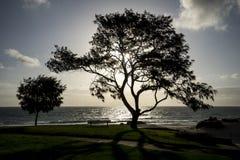 Un coucher du soleil sur une plage de ville à Perth Image stock