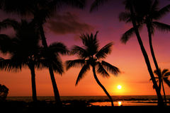 Un coucher du soleil tropical Images stock