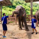 Un couple s'inquiète des éléphants dans un sanctuaire dans la jungle du Chi photo stock