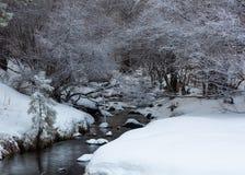 Un courant de méandre est flanqué des banques couvertes par neige et sort de dessous les buissons couverts par neige image libre de droits