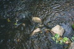Un courant de montagne avec un courant rapide dans une forêt verte d'été Photos libres de droits