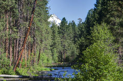 Un courant traversant une forêt de pin avec la neige a couvert la montagne à l'arrière-plan Photos stock