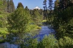 Un courant traversant une forêt de pin avec la neige a couvert la montagne Photo libre de droits