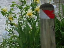 Un courrier chez Waterside est orné avec l'iris jaune et blanc images stock