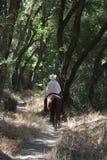 Un cowboy che monta il suo cavallo in una foresta. Fotografia Stock Libera da Diritti