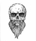 un cráneo barbudo stock de ilustración