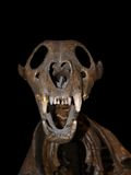 Un crâne effrayant Image libre de droits