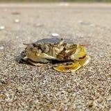Un crabe de mer images stock