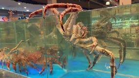 Un crabe géant essaye d'échapper à l'aquarium clips vidéos