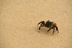 Un crabe rampant loin Photo stock