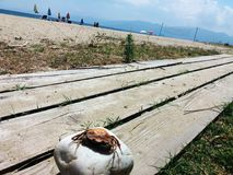 Un crabe sur une pierre dans un jour ensoleillé dans Asprovalta, Grèce Images stock
