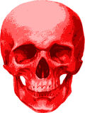 Un cranio vermiglio di un uomo Fotografie Stock