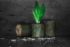 Un crecimiento de flor en un pote hizo el ‹del †del ‹del †de la madera Imagen de archivo libre de regalías