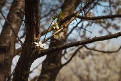 Un crecimiento de flor fuera de una corona del árbol Un rayo de la luz en la oscuridad fotografía de archivo libre de regalías