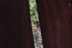 Un crecimiento de flor trasero la pared Fotografía de archivo