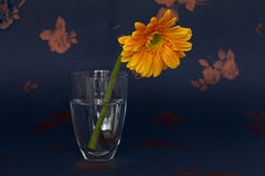 Un crisantemo en un vidrio Imagenes de archivo