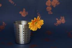 Un crisantemo in un secchio d'acciaio Fotografia Stock Libera da Diritti