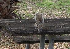 Un critter curioso fotografia stock