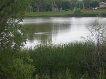 Un Critter solo nel lago oggi fotografie stock libere da diritti