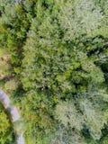 Un croisement de route une forêt Photographie stock libre de droits
