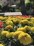 Un cuadrado con las flores de oro en el corazón de Kyiv - Ucrania - capital Fotografía de archivo libre de regalías